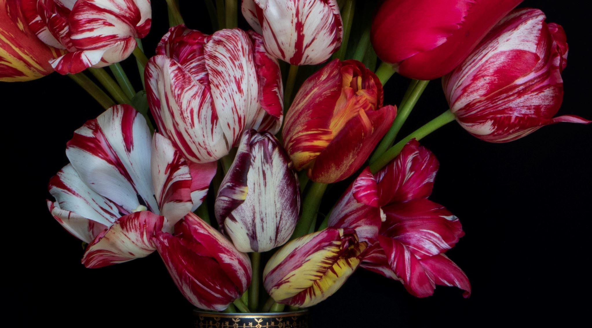 Kunst: Tulip Explosion van kunstenaar Iris Gonzalez