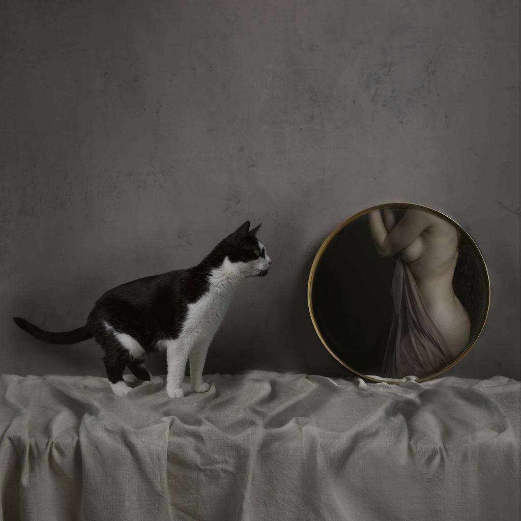 Kunst: Mirror cat van kunstenaar Kaat Stieber