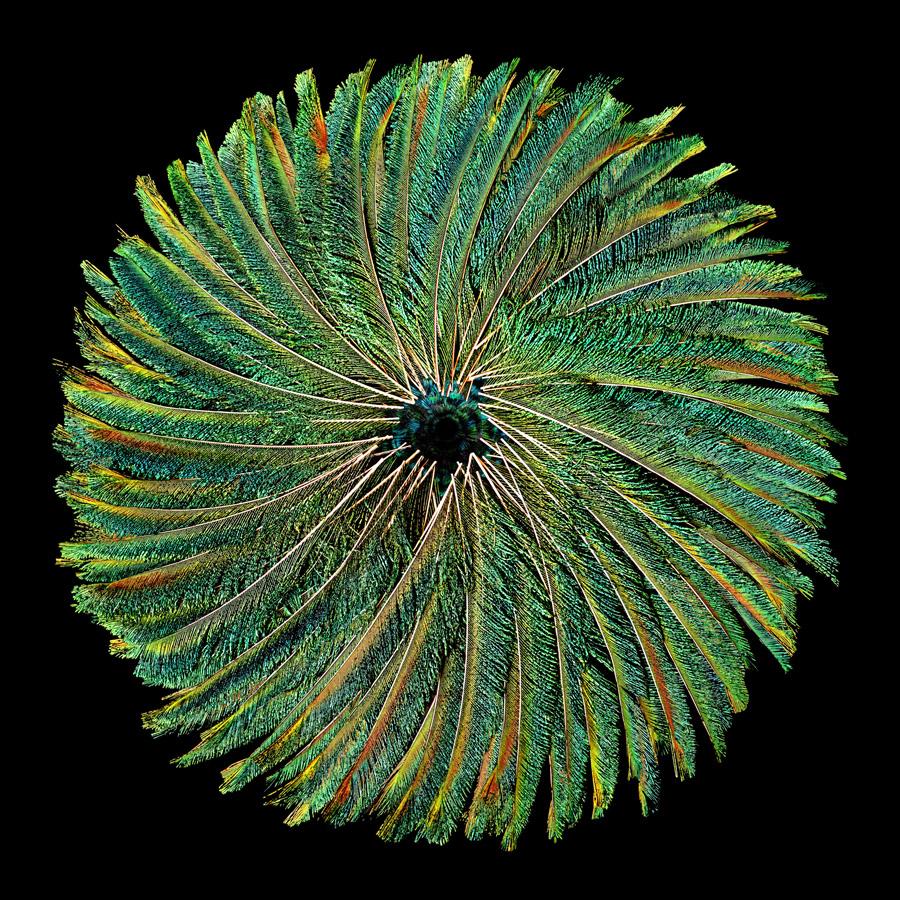 Kunst: CIRCLE OF LIFE van kunstenaar Anouk van Tetering (Anoukart)