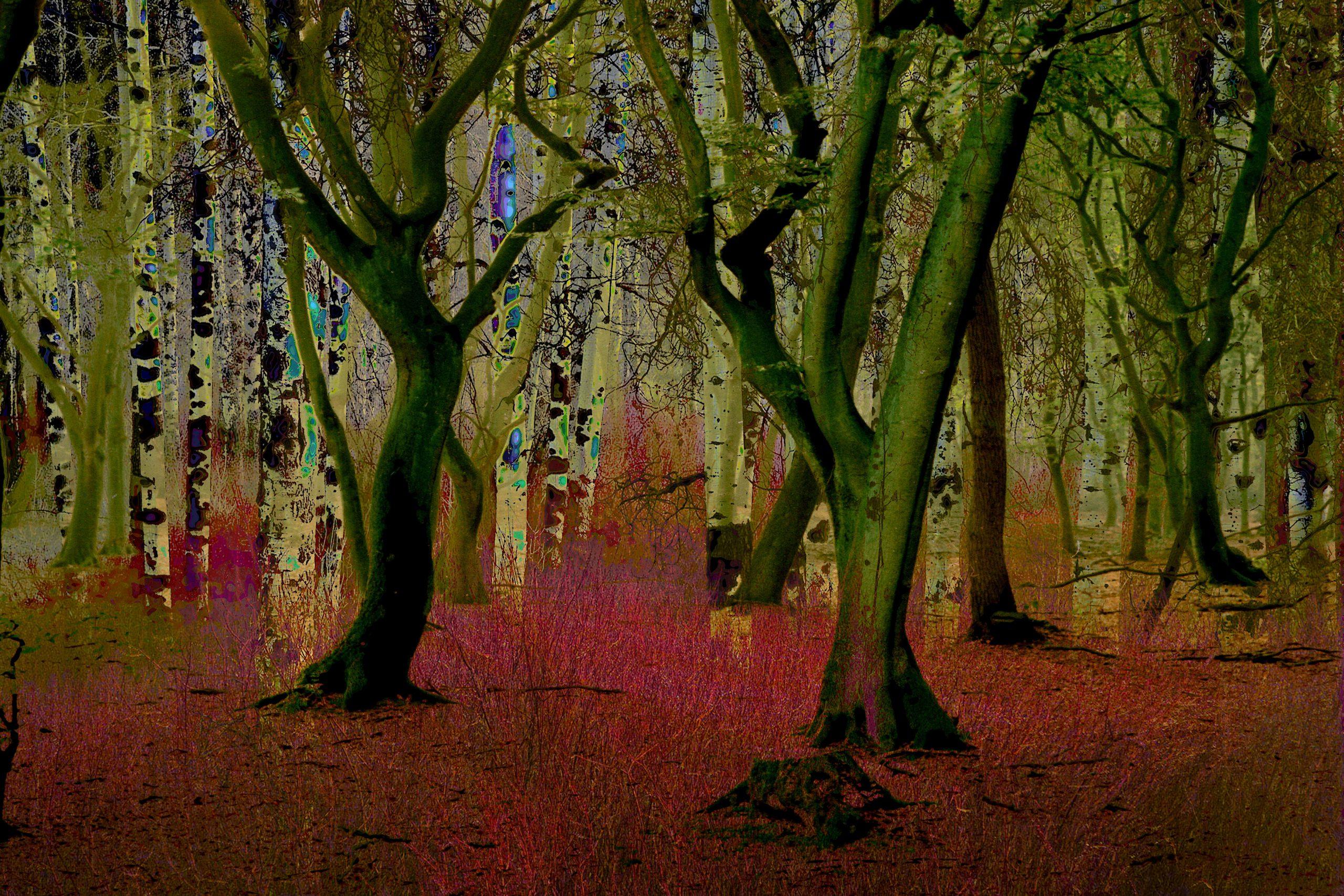 Kunst: Mysterious woodland opus I van kunstenaar Geert Lemmers