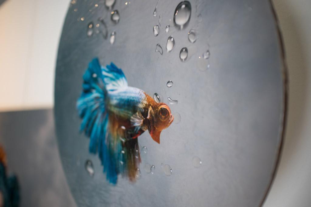 Kunst: Royal Blue – fish van kunstenaar Kaat Stieber