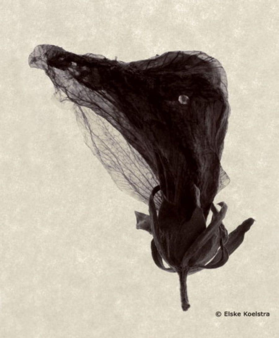Kunst: A bird is a bird van kunstenaar Elske Koelstra