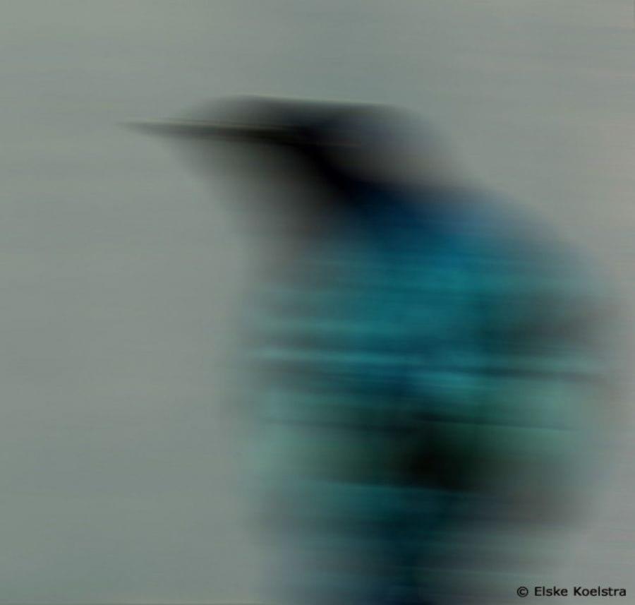 Kunst: Blue bird van kunstenaar Elske Koelstra