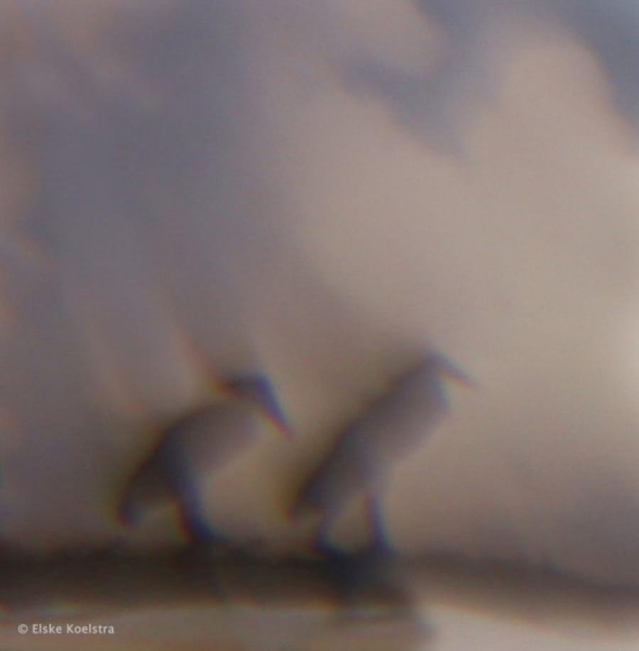 Kunst: l'aube des ombrettes van kunstenaar Elske Koelstra