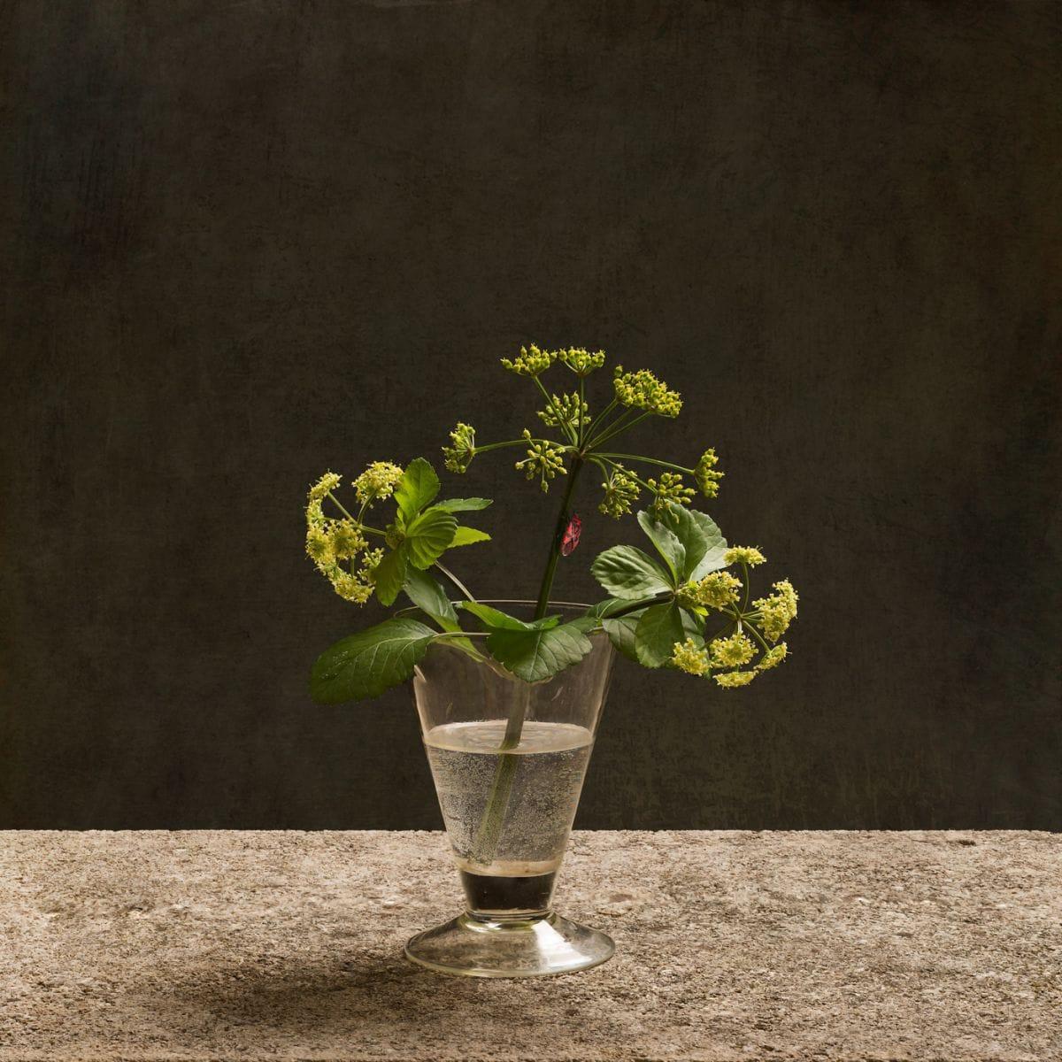 Kunst: Lavas van kunstenaar Tineke Stoffels