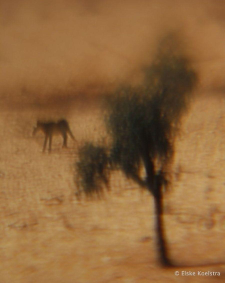 Kunst: Le cheval et l'arbre van kunstenaar Elske Koelstra
