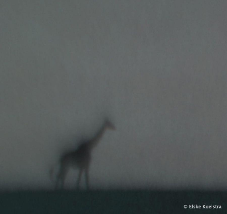 Kunst: Le Girafe van kunstenaar Elske Koelstra