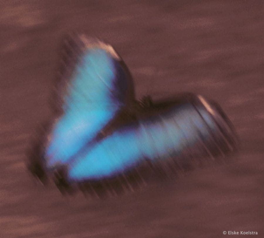 Kunst: le vent emportait son bleu du ciel van kunstenaar Elske Koelstra