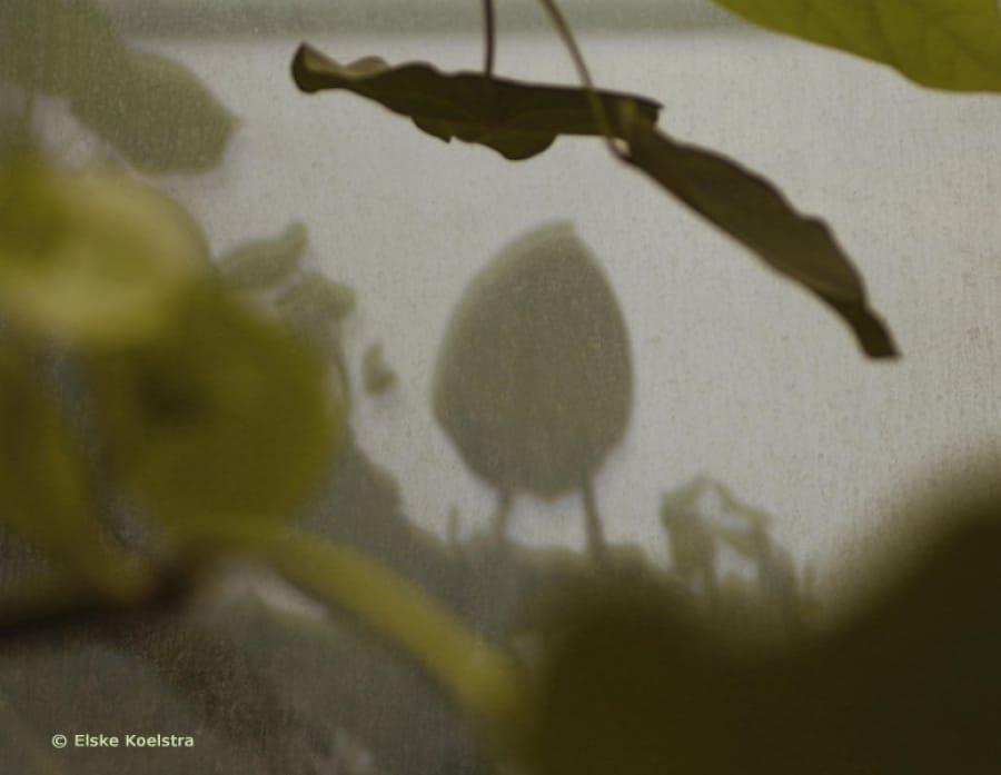 Kunst: L'Oeuf de Colombe van kunstenaar Elske Koelstra