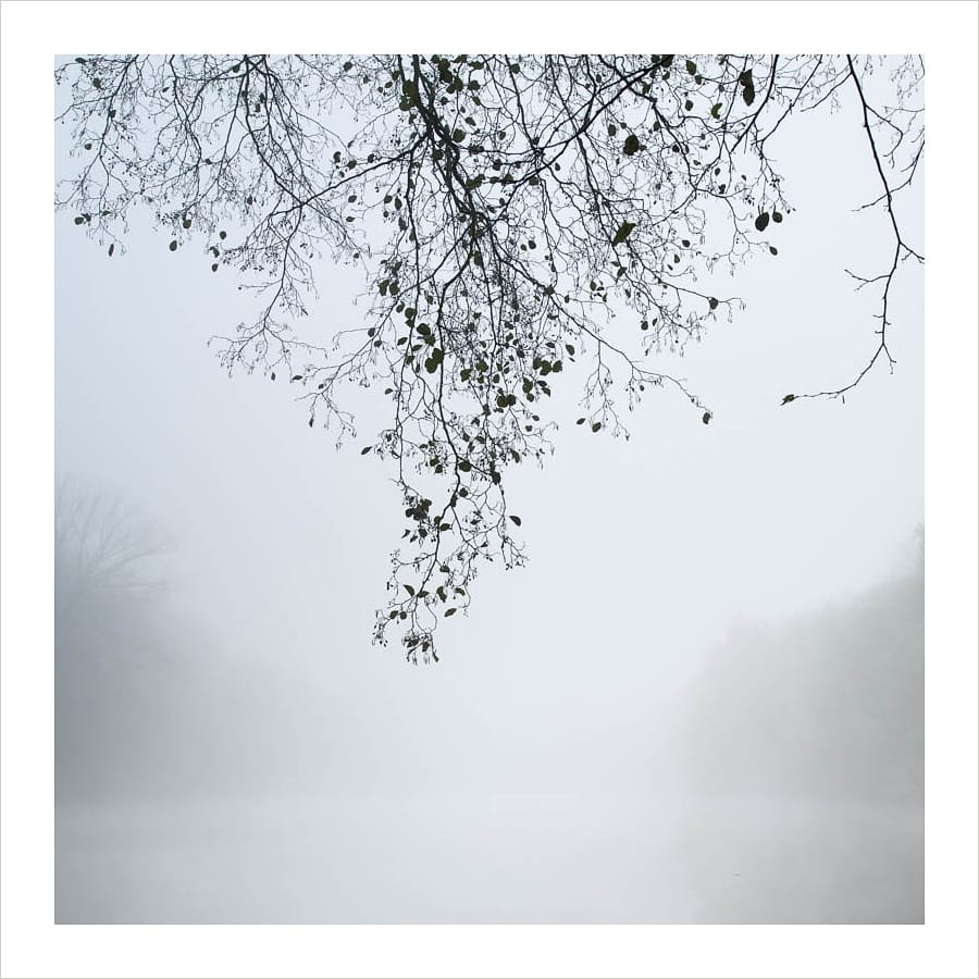 Kunst: Of trees and fog van kunstenaar Wilco Dragt