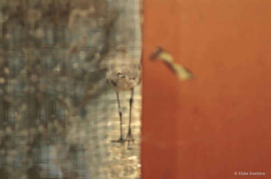 Kunst: The Bird and the Butterfly van kunstenaar Elske Koelstra