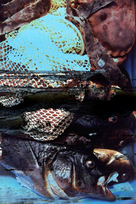 Kunst: Vis en krab van kunstenaar Pimm van Mourik